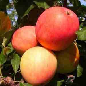odyssey apple
